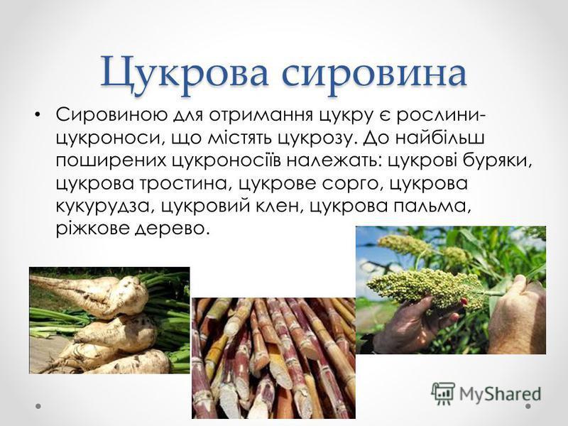 Цукрова сировина Сировиною для отримання цукру є рослини- цукроноси, що містять цукрозу. До найбільш поширених цукроносіїв належать: цукрові буряки, цукрова тростина, цукрове сорго, цукрова кукурудза, цукровий клен, цукрова пальма, ріжкове дерево.