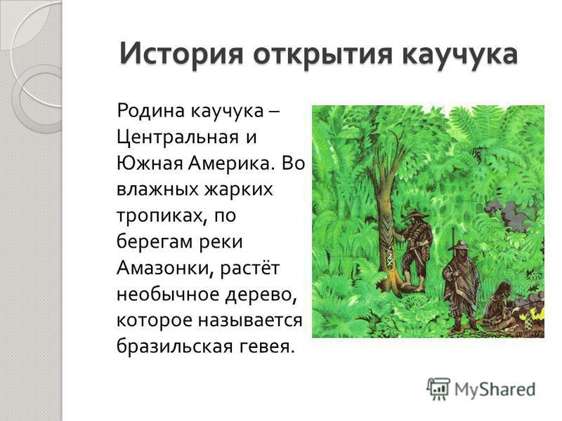 История открытия каучука Родина каучука – Центральная и Южная Америка. Во влажных жарких тропиках, по берегам реки Амазонки, растёт необычное дерево, которое называется бразильская гевея.