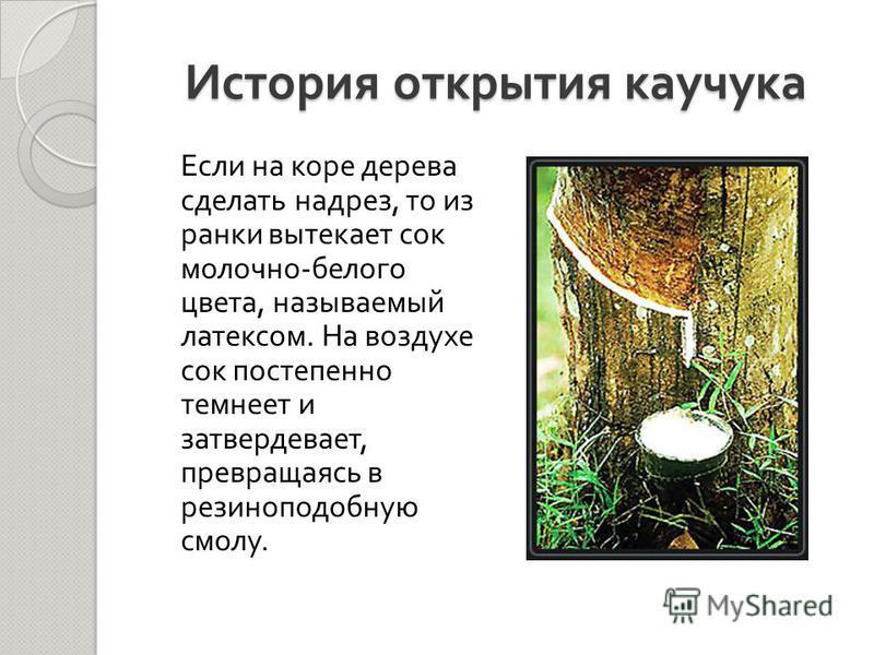 История открытия каучука Если на коре дерева сделать надрез, то из ранки вытекает сок молочно - белого цвета, называемый латексом. На воздухе сок постепенно темнеет и затвердевает, превращаясь в резиноподобную смолу.
