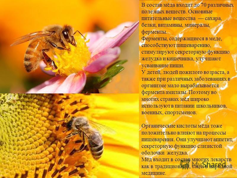 В состав мёда входит до 70 различных полезных веществ. Основные питательные вещества сахара, белки, витамины, минералы, ферменты. Ферменты, содержащиеся в меде, способствуют пищеварению, стимулируют секреторную функцию желудка и кишечника, улучшают у