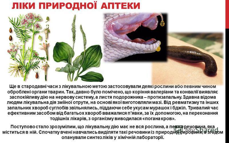 ЛІКИ ПРИРОДНОЇ АПТЕКИ Ще в стародавні часи з лікувальною метою застосовували деякі рослини або певним чином оброблені органи тварин. Так, давно було помічено, що коріння валеріани та конвалії виявляє заспокійливу дію на нервову систему, а листя подор