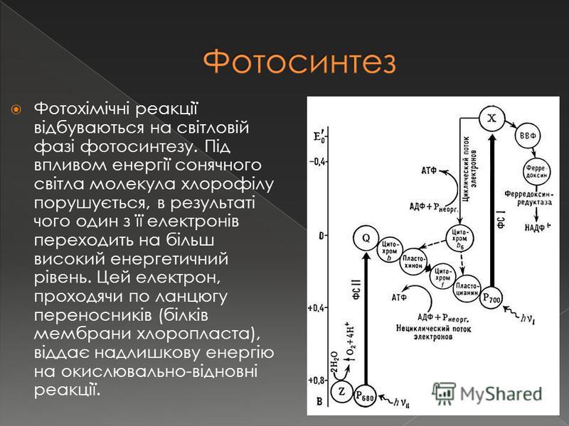 Фотохімічні реакції відбуваються на світловій фазі фотосинтезу. Під впливом енергії сонячного світла молекула хлорофілу порушується, в результаті чого один з її електронів переходить на більш високий енергетичний рівень. Цей електрон, проходячи по ла