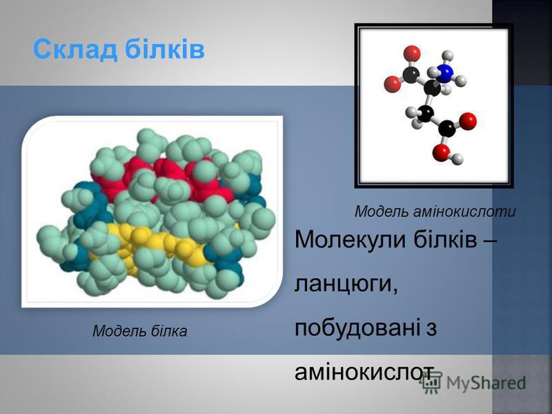 Молекули білків – ланцюги, побудовані з амінокислот Склад білків Модель білка Модель амінокислоти