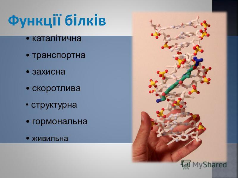 Функц ії б і лк і в каталітична транспортна захисна скоротлива структурна гормональна живильна