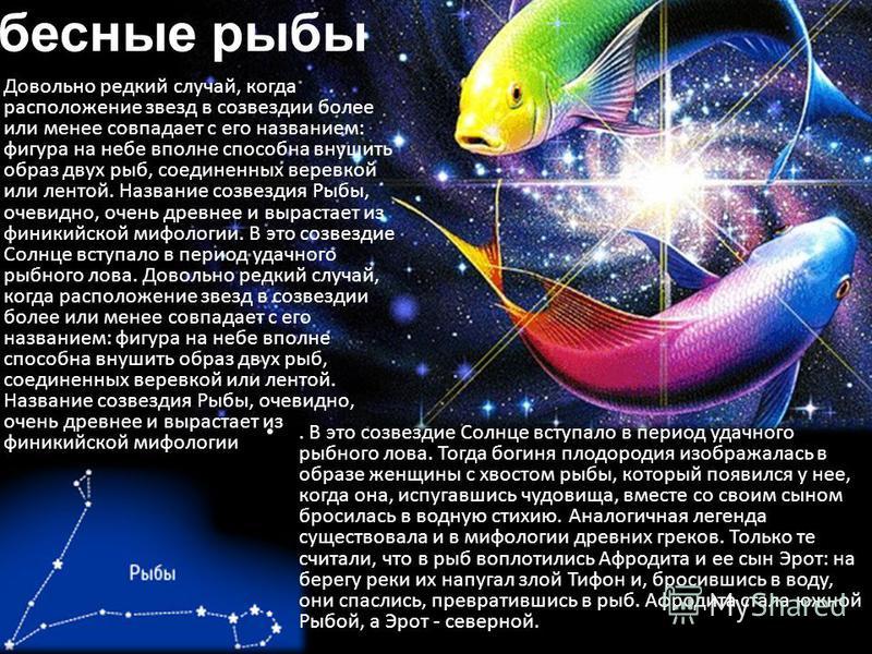 Небесные рыбы Довольно редкий случай, когда расположение звезд в созвездии более или менее совпадает с его названием: фигура на небе вполне способна внушить образ двух рыб, соединенных веревкой или лентой. Название созвездия Рыбы, очевидно, очень дре