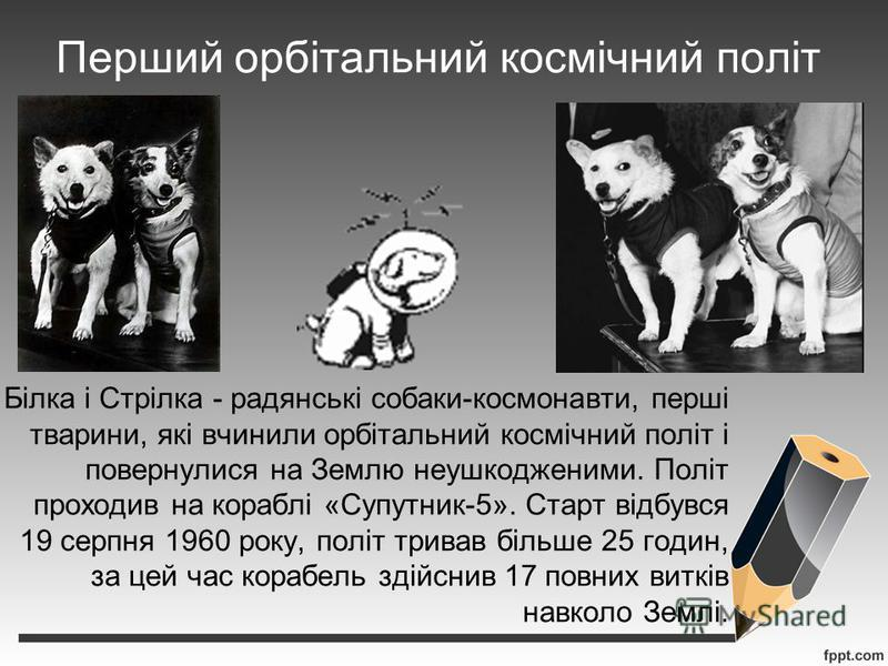 Перший орбітальний космічний політ Білка і Стрілка - радянські собаки-космонавти, перші тварини, які вчинили орбітальний космічний політ і повернулися на Землю неушкодженими. Політ проходив на кораблі «Супутник-5». Старт відбувся 19 серпня 1960 року,