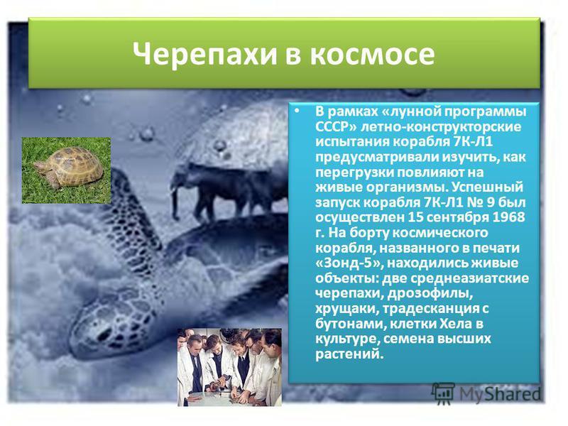 Черепахи в космосе В рамках «лунной программы СССР» летно-конструкторские испытания корабля 7К-Л1 предусматривали изучить, как перегрузки повлияют на живые организмы. Успешный запуск корабля 7К-Л1 9 был осуществлен 15 сентября 1968 г. На борту космич