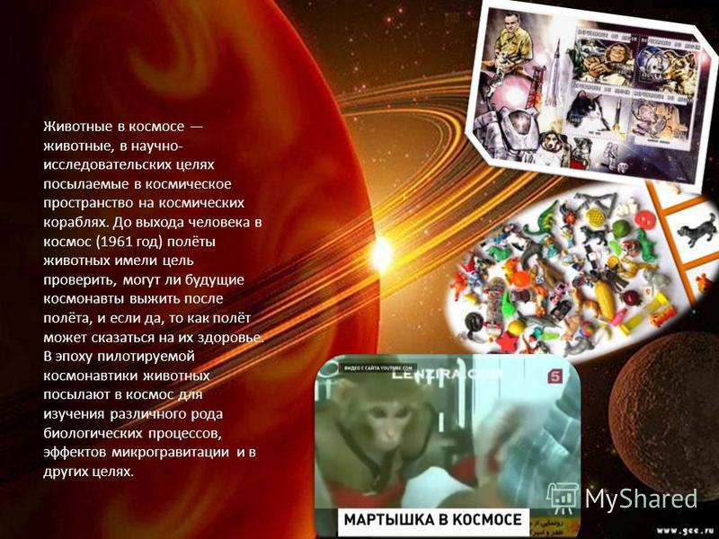 Животные в космосе животные, в научно- исследовательских целях посылаемые в космическое пространство на космических кораблях. До выхода человека в космос (1961 год) полёты животных имели цель проверить, могут ли будущие космонавты выжить после полёта