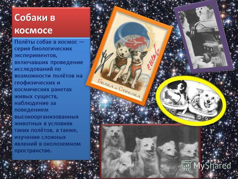 Собаки Собаки в космосе Полёты собак в космос серия биологических экспериментов, включавших проведение исследований по возможности полётов на геофизических и космических ракетах живых существ, наблюдение за поведением высокоорганизованных животных в