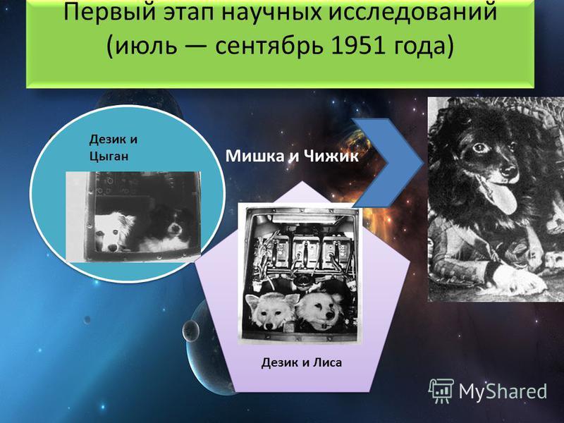 Первый этап научных исследований (июль сентябрь 1951 года) Мишка и Чижик Дезик и Цыган Дезик и Лиса