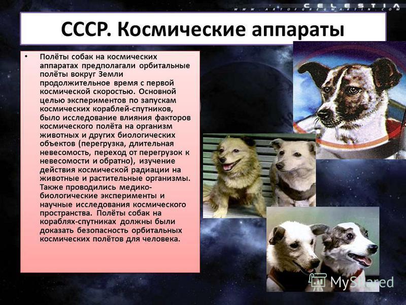 СССР. Космические аппараты Полёты собак на космических аппаратах предполагали орбитальные полёты вокруг Земли продолжительное время с первой космической скоростью. Основной целью экспериментов по запускам космических кораблей-спутников, было исследов