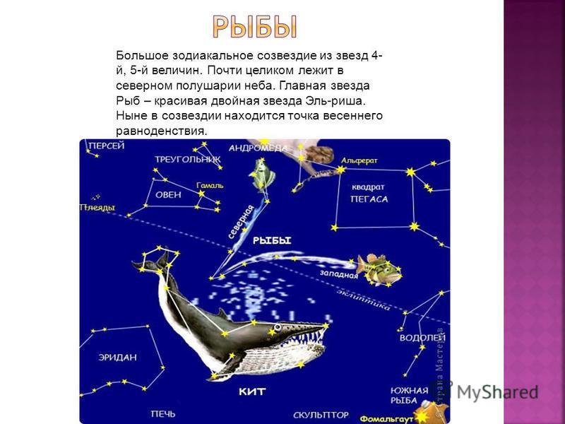 Большое зодиакальное созвездие из звезд 4- й, 5-й величин. Почти целиком лежит в северном полушарии неба. Главная звезда Рыб – красивая двойная звезда Эль-риша. Ныне в созвездии находится точка весеннего равноденствия.