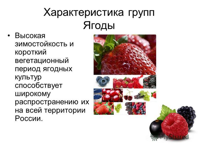 Характеристика групп Ягоды Высокая зимостойкость и короткий вегетационный период ягодных культур способствует широкому распространению их на всей территории России.