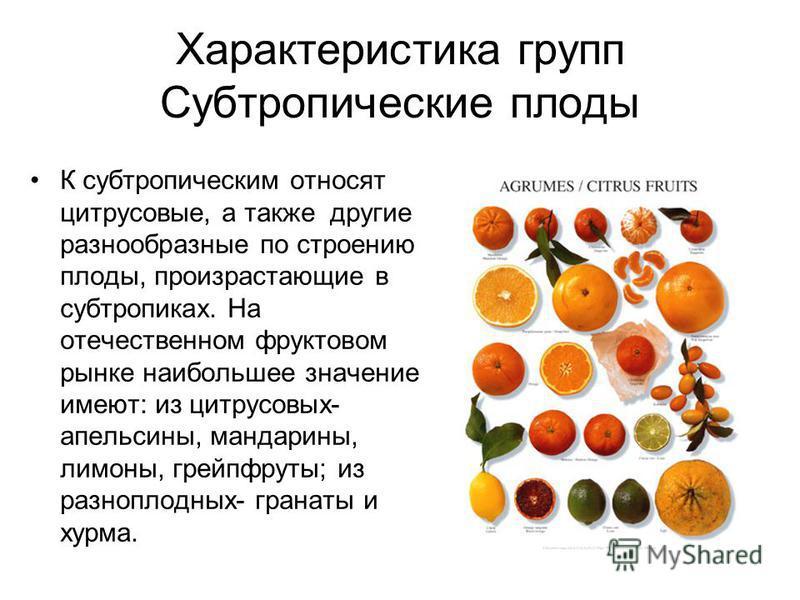 Характеристика групп Субтропические плоды К субтропическим относят цитрусовые, а также другие разнообразные по строению плоды, произрастающие в субтропиках. На отечественном фруктовом рынке наибольшее значение имеют: из цитрусовых- апельсины, мандари