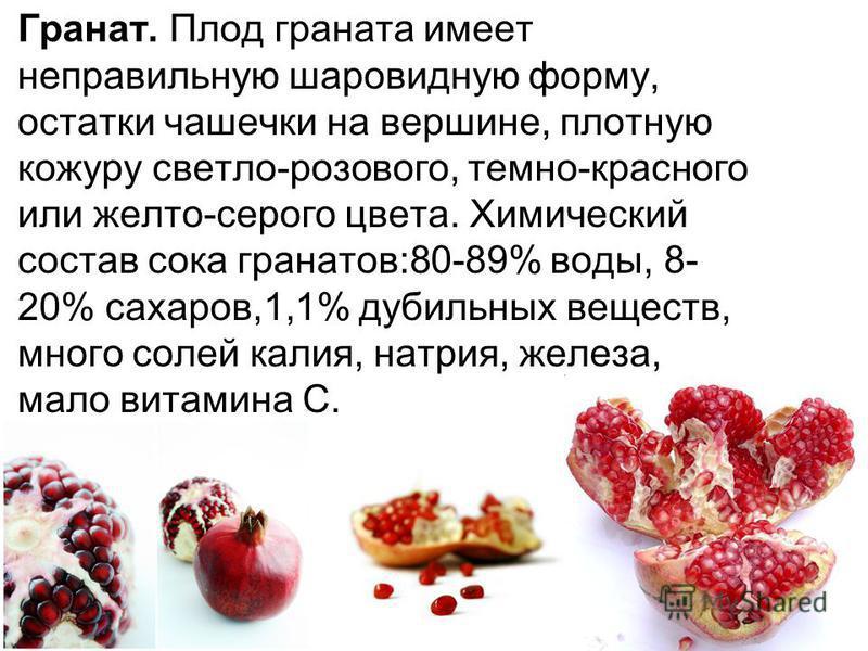 Гранат. Плод граната имеет неправильную шаровидную форму, остатки чашечки на вершине, плотную кожуру светло-розового, темно-красного или желто-серого цвета. Химический состав сока гранатов:80-89% воды, 8- 20% сахаров,1,1% дубильных веществ, много сол