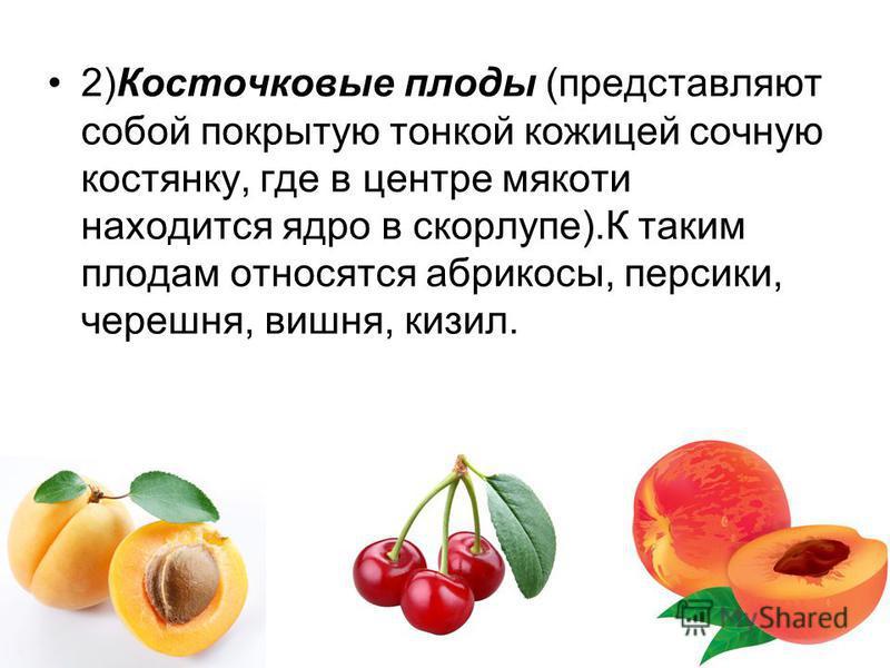 2)Косточковые плоды (представляют собой покрытую тонкой кожицей сочную костянку, где в центре мякоти находится ядро в скорлупе).К таким плодам относятся абрикосы, персики, черешня, вишня, кизил.