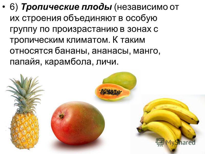 6) Тропические плоды (независимо от их строения объединяют в особую группу по произрастанию в зонах с тропическим климатом. К таким относятся бананы, ананасы, манго, папайя, карамбола, личи.
