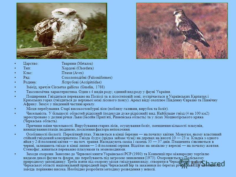 Царство:Тварини (Metazoa) Тип:Хордові (Chordata) Клас:Птахи (Aves) Ряд:Соколоподібні (Falconiformes) Родина:Яструбові (Accipitridae) Змієї́д, крачу́н Circaetus gallicus (Gmelin, 1788) Таксономічна характеристика. Один з 4 видів роду; єдиний вид роду
