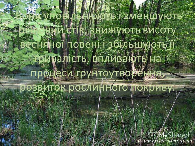 Вони уповільнюють і зменшують річковий стік, знижують висоту весняної повені і збільшують її тривалість, впливають на процеси грунтоутворення, розвиток рослинного покриву.