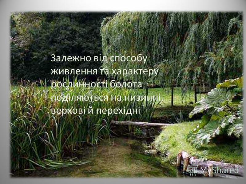 Залежно від способу живлення та характеру рослинності болота поділяються на низинні, верхові й перехідні.