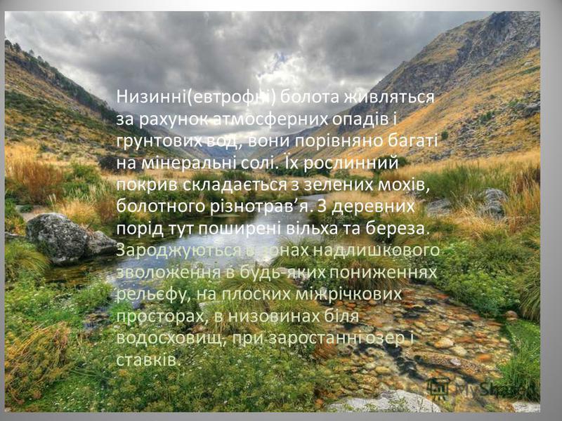 Низинні(евтрофні) болота живляться за рахунок атмосферних опадів і грунтових вод, вони порівняно багаті на мінеральні солі. Їх рослинний покрив складається з зелених мохів, болотного різнотравя. З деревних порід тут поширені вільха та береза. Зароджу