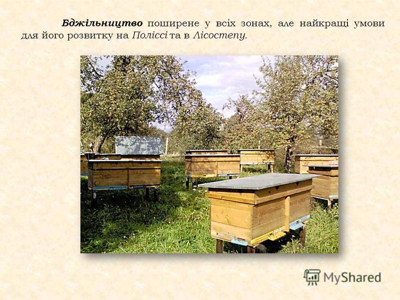Бджільництво поширене у всіх зонах, але найкращі умови для його розвитку на Поліссі та в Лісостепу.