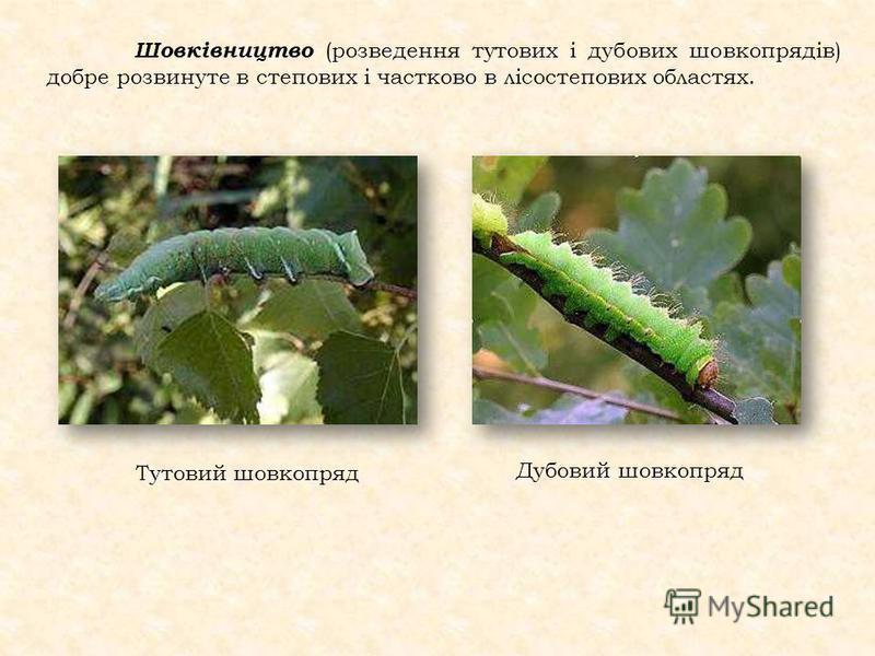 Шовківництво (розведення тутових і дубових шовкопрядів) добре розвинуте в степових і частково в лісостепових областях. Тутовий шовкопряд Дубовий шовкопряд