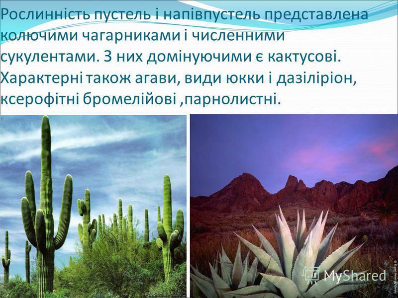 Рослинність пустель і напівпустель представлена колючими чагарниками і численними сукулентами. З них домінуючими є кактусові. Характерні також агави, види юкки і дазіліріон, ксерофітні бромелійові,парнолистні.