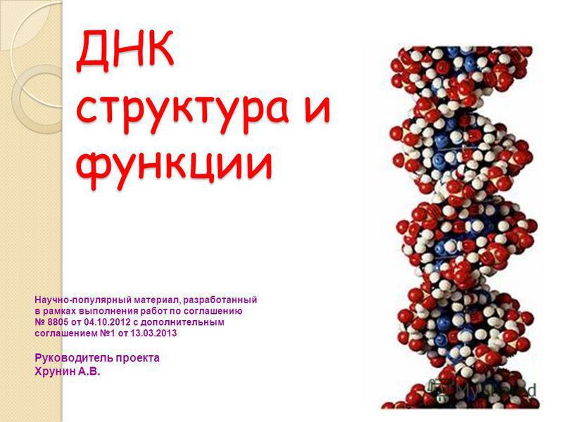 ДНК структура и функции Научно-популярный материал, разработанный в рамках выполнения работ по соглашению 8805 от 04.10.2012 с дополнительным соглашением 1 от 13.03.2013 Руководитель проекта Хрунин А.В.