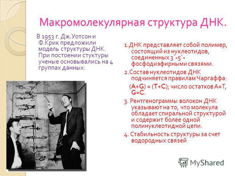 Макромолекулярная структура ДНК. В 1953 г. Дж. Уотсон и Ф. Крик предложили модель структуры ДНК. При построении структуры ученые основывались на 4 группах данных : 1. ДНК представляет собой полимер, состоящий из нуклеотидов, соединенных 3`-5`- фосфод