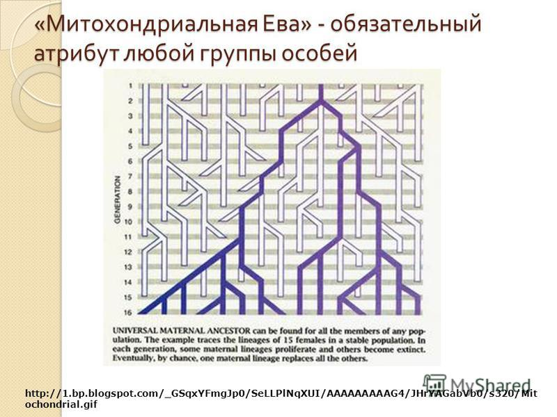 « Митохондриальная Ева » - обязательный атрибут любой группы особей http://1.bp.blogspot.com/_GSqxYFmgJp0/SeLLPlNqXUI/AAAAAAAAAG4/JHrYAGabVb0/s320/Mit ochondrial.gif
