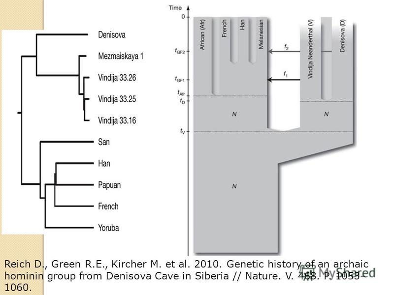 Reich D., Green R.E., Kircher M. et al. 2010. Genetic history of an archaic hominin group from Denisova Cave in Siberia // Nature. V. 468. P. 1053– 1060.