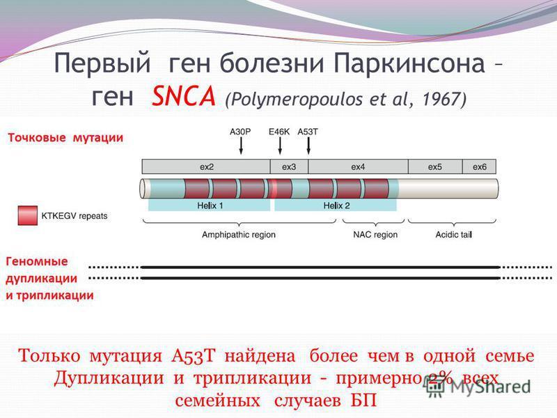 Первый ген болезни Паркинсона – ген SNCA (Polymeropoulos et al, 1967) Только мутация А53Т найдена более чем в одной семье Дупликации и трипликации - примерно 2% всех семейных случаев БП