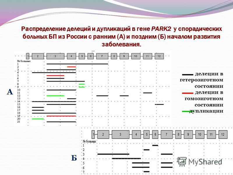Распределение делеций и дупликаций в гене PARK2 у спорадических больных БП из России с ранним (А) и поздним (Б) началом развития заболевания. А Б делеции в гетерозиготном состоянии делеции в гомозиготном состоянии дупликации