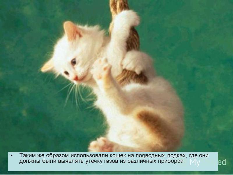 Таким же образом использовали кошек на подводных лодках, где они должны были выявлять утечку газов из различных приборов.