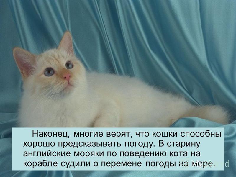 Наконец, многие верят, что кошки способны хорошо предсказывать погоду. В старину английские моряки по поведению кота на корабле судили о перемене погоды на море.