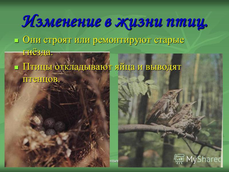 Анатольева Э.В. Изменение в жизни птиц. Они строят или ремонтируют старые гнёзда. Они строят или ремонтируют старые гнёзда. Птицы откладывают яйца и выводят птенцов. Птицы откладывают яйца и выводят птенцов.