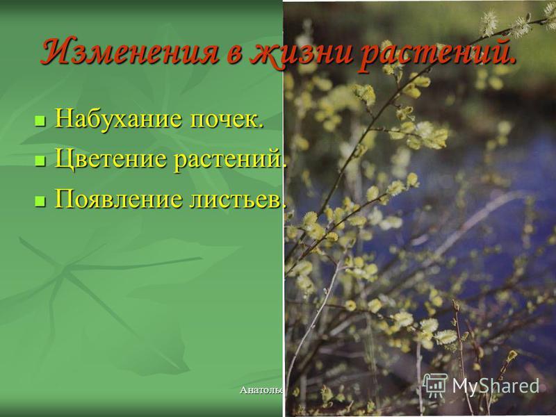 Изменения в жизни растений. Набухание почек. Набухание почек. Цветение растений. Цветение растений. Появление листьев. Появление листьев.