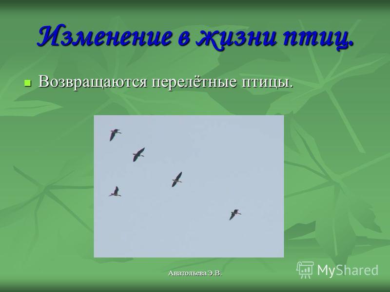 Анатольева Э.В. Изменение в жизни птиц. Возвращаются перелётные птицы.