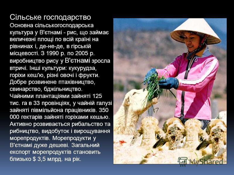 Сільське господарство Основна сільськогосподарська культура у В'єтнамі - рис, що займає величезні площі по всій країні на рівнинах і, де-не-де, в гірській місцевості. З 1990 р. по 2005 р. виробництво рису у В'єтнамі зросла втричі. Інші культури: куку