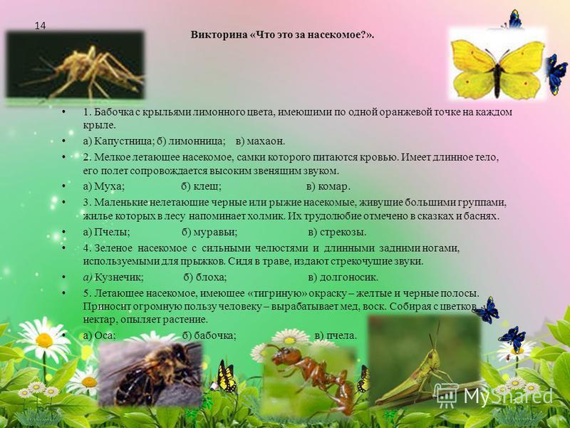 Викторина «Что это за насекомое?». 1. Бабочка с крыльями лимонного цвета, имеющими по одной оранжевой точке на каждом крыле. а) Капустница; б) лимонница; в) махаон. 2. Мелкое летающее насекомое, самки которого питаются кровью. Имеет длинное тело, его