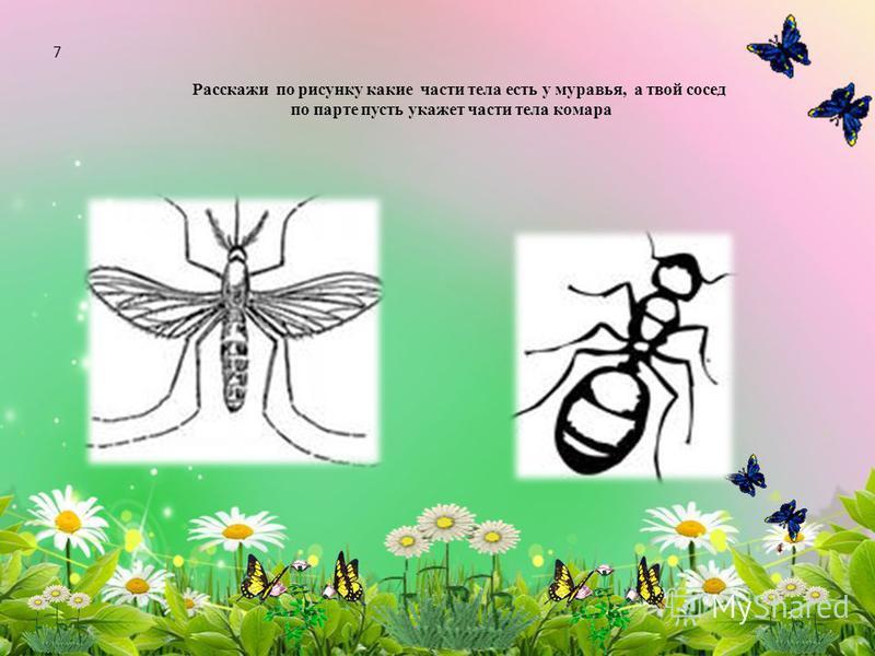 Расскажи по рисунку какие части тела есть у муравья, а твой сосед по парте пусть укажет части тела комара 7
