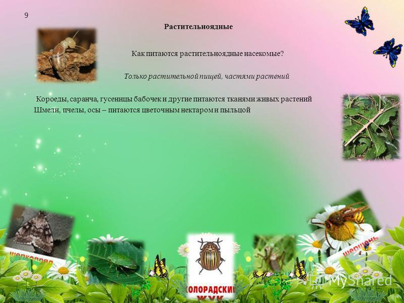 Растительноядные Как питаются растительноядные насекомые? Только растительной пищей, частями растений Короеды, саранча, гусеницы бабочек и другие питаются тканями живых растений Шмели, пчелы, осы – питаются цветочным нектаром и пыльцой 9