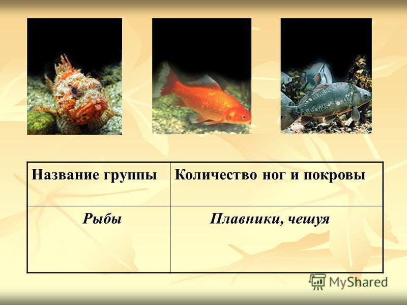 Название группы Количество ног и покровы Рыбы Рыбы Плавники, чешуя Плавники, чешуя