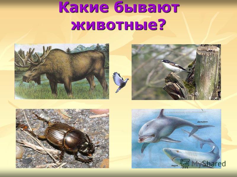 Какие бывают животные?