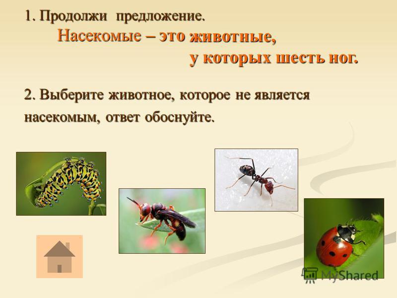 1. Продолжи предложение. Насекомые – это 2. Выберите животное, которое не является насекомым, ответ обоснуйте. животные, у которых шесть ног.