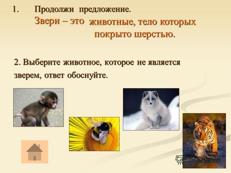 1. Продолжи предложение. Звери – это 2. Выберите животное, которое не является зверем, ответ обоснуйте. животные, тело которых покрыто шерстью. покрыто шерстью.