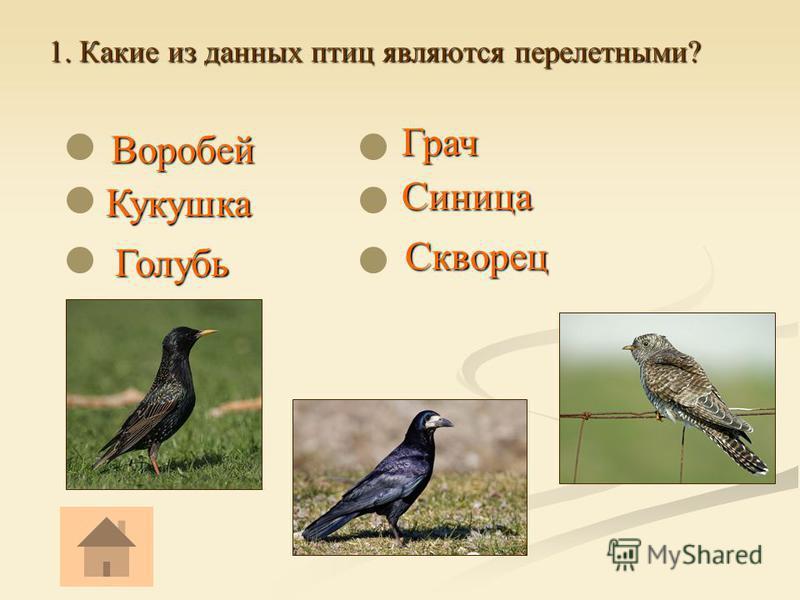 1. Какие из данных птиц являются перелетными? Воробей Воробей Кукушка Кукушка Голубь Голубь Грач Грач Скворец Скворец Синица