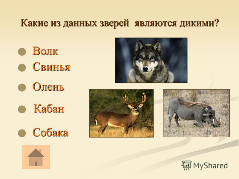 Какие из данных зверей являются дикими? Волк Волк Собака Кабан Кабан Олень Свинья Свинья