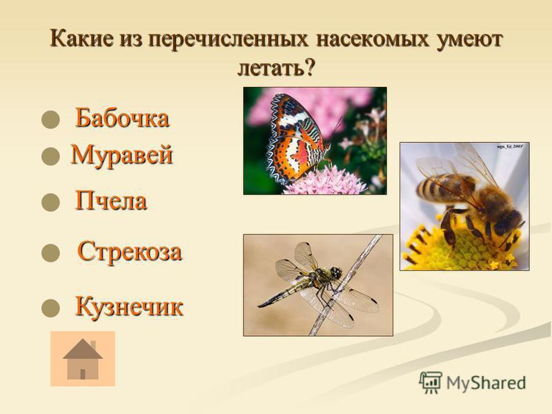 Какие из перечисленных насекомых умеют летать? Бабочка Бабочка Кузнечик Стрекоза Стрекоза Пчела Муравей Муравей
